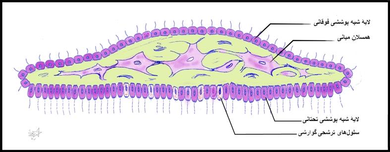 trichoplax-small