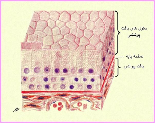 stratified-columnar